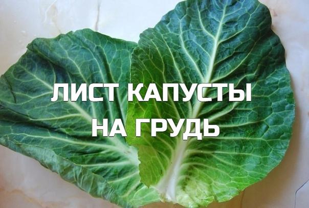 ЛИСТ КАПУСТЫ НА ГРУДЬ