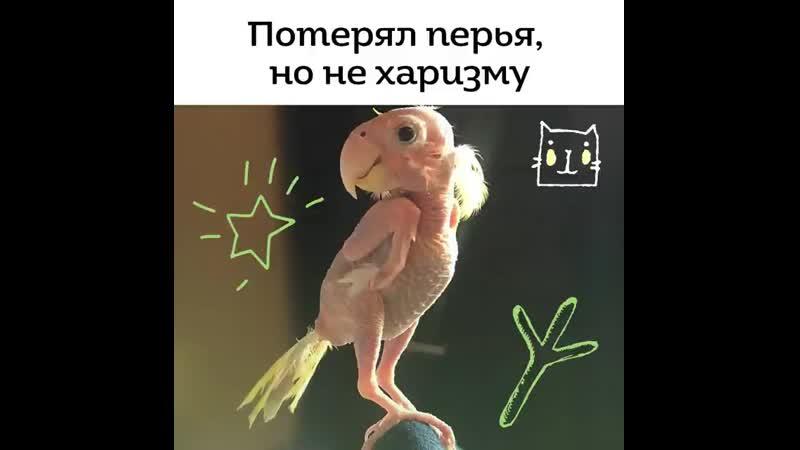 Kot_media_20200530_1.mp4