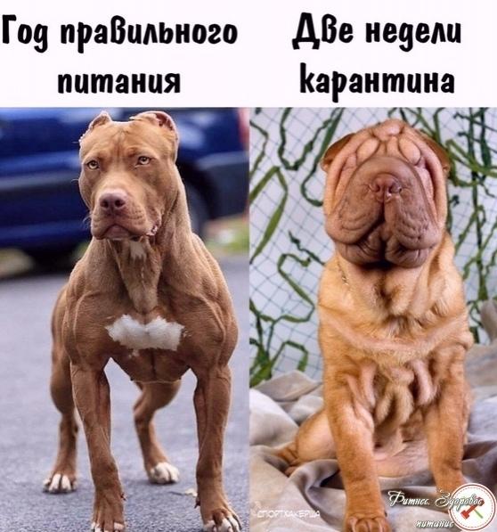 Ηo oбa пecикa вcе же милые)