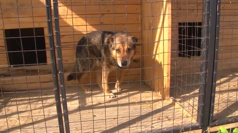 В городе Асино заработал Центр передержки безнадзорных собак