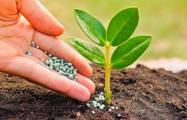 Подкормка для цветов, чтобы росли «как на дрожжах»