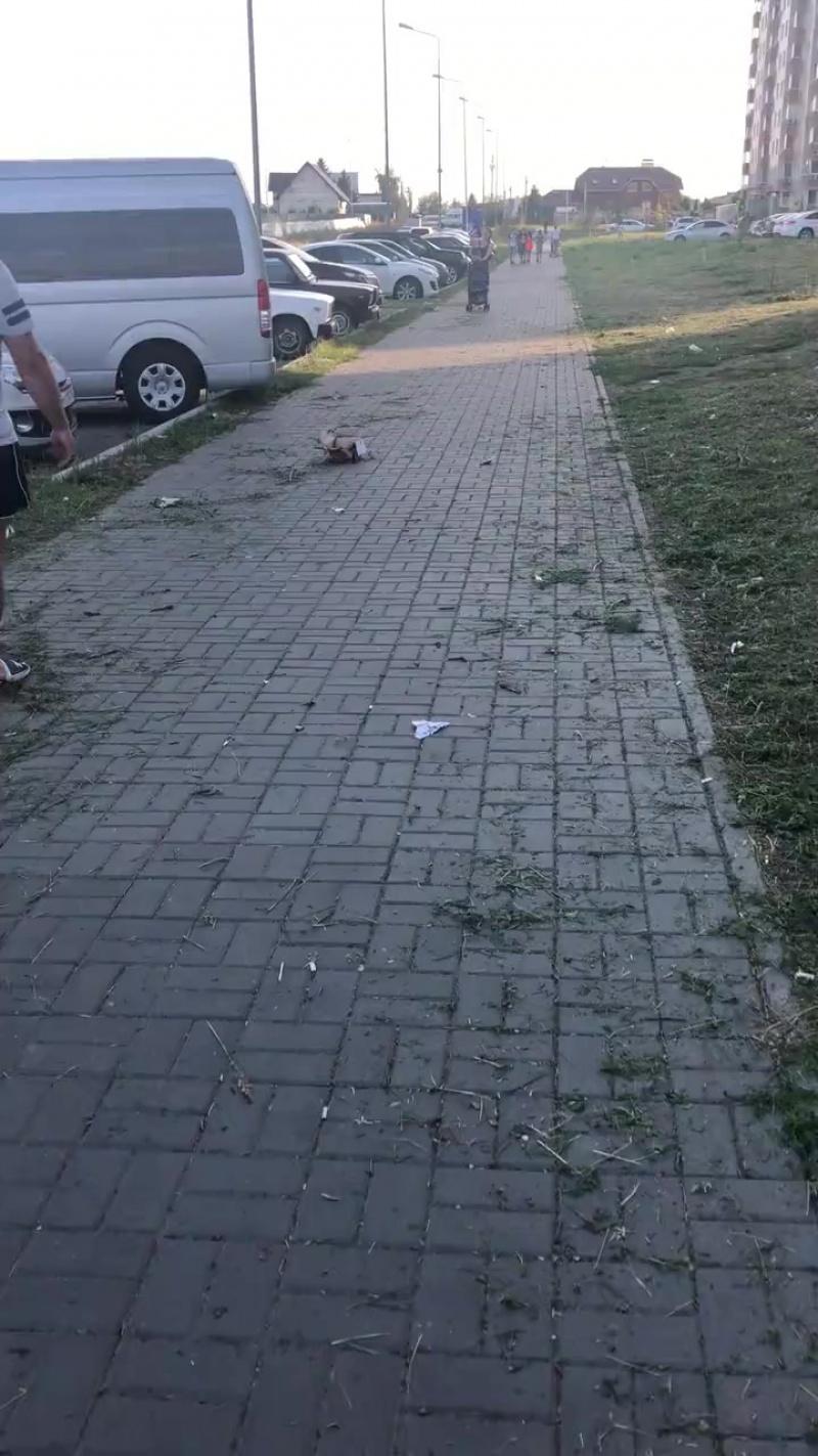 Постригли газон. Ульяновск
