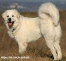 Если рядом с человеком идет собака,путь уже не кажется таким безнадежно одиноким.
