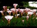 Моим Друзьям ВК Ангела Хранителя! Мир прекрасен Душа прекрасна До встречи в душистом саду Высшего мира