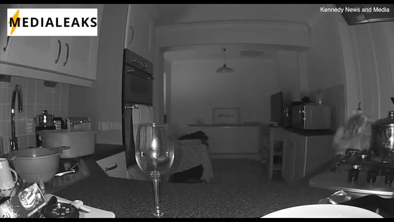 Слепая и глухая собака навела суету на кухне ночью