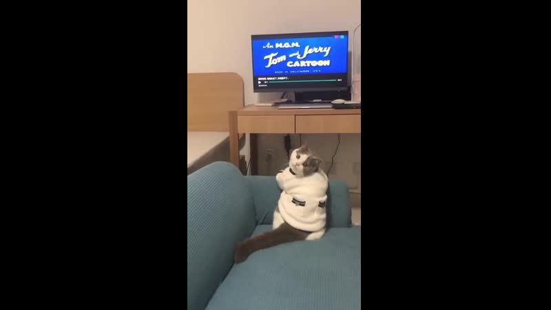 Кот смотрит мультик)