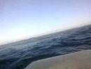 Ротан 420 Хонда20 Балтийское море 14 03 2014г Ход в ветер 9м с и волну до 2 5м Идём за треской