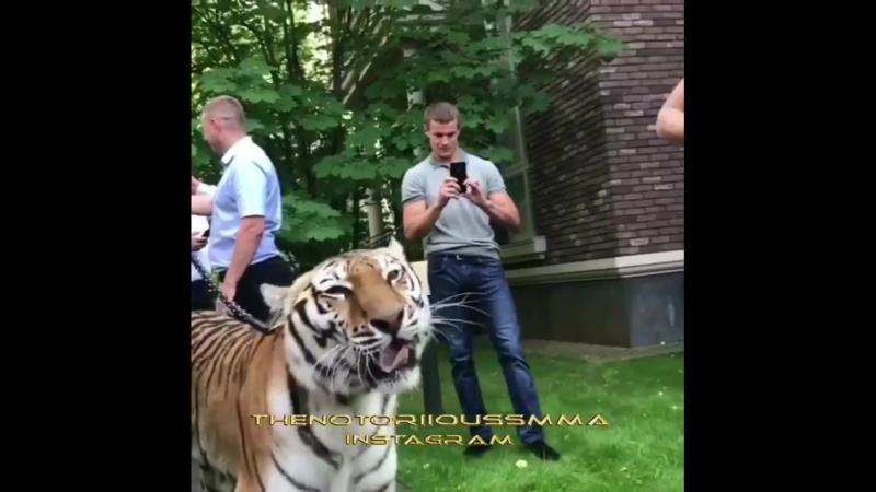 Конор против тигра [MDK DAGESTAN]