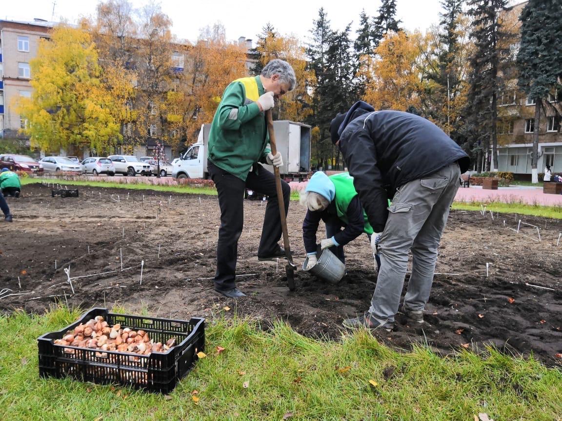 Более 200 тысяч тюльпанов высадят в Химках