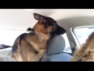 Когда едешь к ветеринару и уже не такой дерзкий