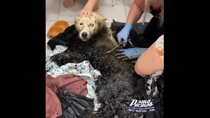 Спасение собаки упавший в битумную яму 04 08 20 Это Ростов на Дону