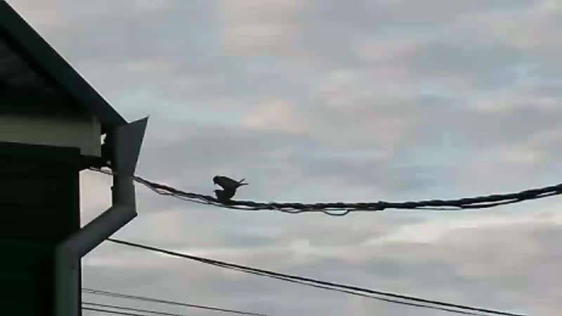 Птички воробушки в июле не перестают процесс воспроизводства ☝️