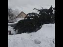 Чиновники вернули елку в Топках