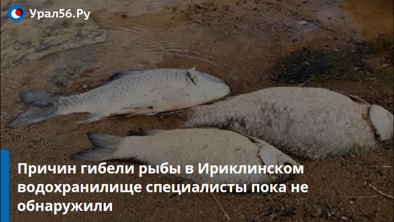 Причин гибели рыбы в Ириклинском водохранилище специалисты не обнаружили