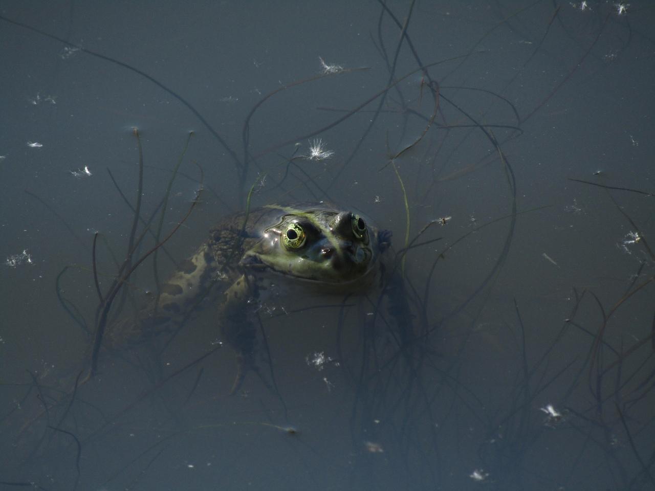 Лягушка из Царицынского пруда