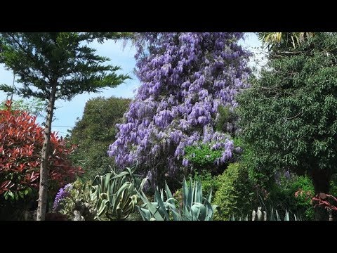 Природа Сочи. Весна, апрель в Сочи.Потрясающе красивая природа. Зимний театр. Климат субтропики Сочи