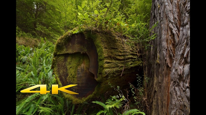 Redwood National Park 4K Virtual Hike
