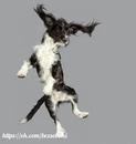 Очаровательные летающие собаки