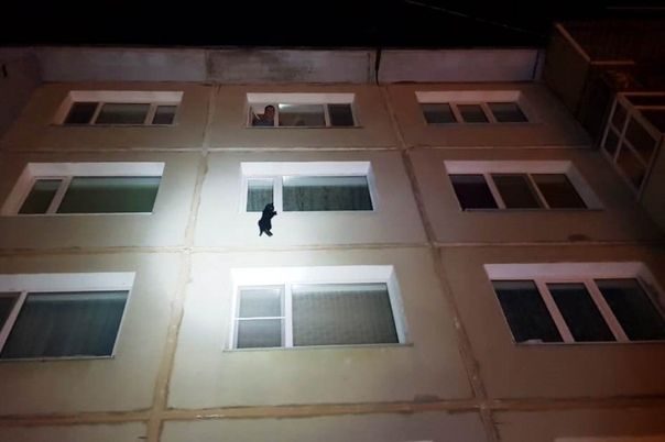 Давайте что то хорошее! В Магадане спасли котика! На окне одного из домов люди заметили кота, который в 30-градусный мороз висел на одной лапке. Оказалось, что его пьяная хозяйка просто уснула и