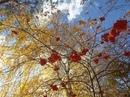 Когда гляжу на летящие листья,