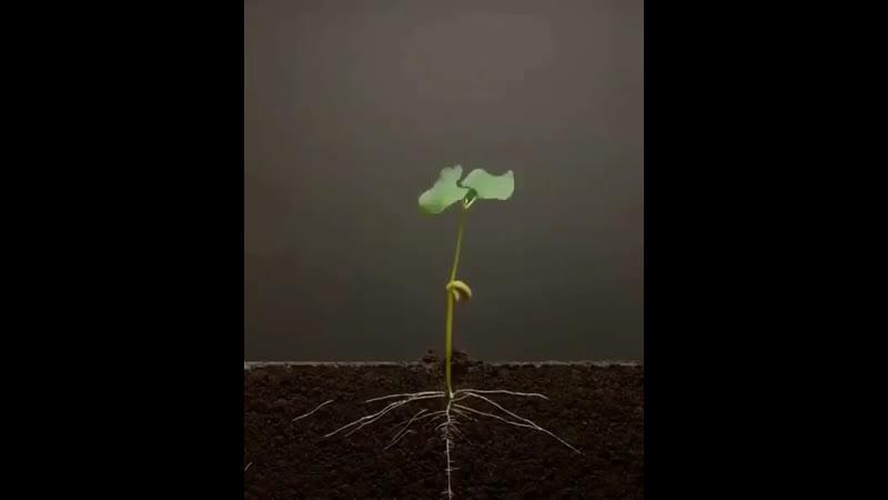 Өсімдіктердің өсуі жайлы