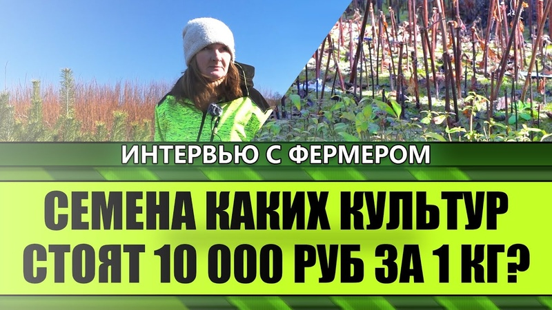 Семена каких культур стоят 10 000 руб за 1 КГ