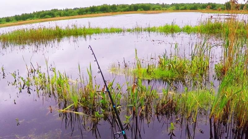 Поставил эту приманку и пошла рыбалка Блёсны в пролёте РАДИ ТАКИХ ПОКЛЁВОК СТОИЛО СЮДА ЕХАТЬ Рыбалка на спиннинг осенью 2020 Ловля на спиннинг на реке Осень 2020 Речные монстры Рыбы много и разной РВУТСЯ ЛЕСКИ ГНУТСЯ БАГРЫ Ре