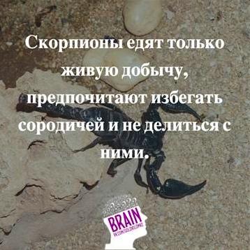 https://sun1-16.userapi.com/c543107/v543107259/67a97/O4m545ku0Sw.jpg
