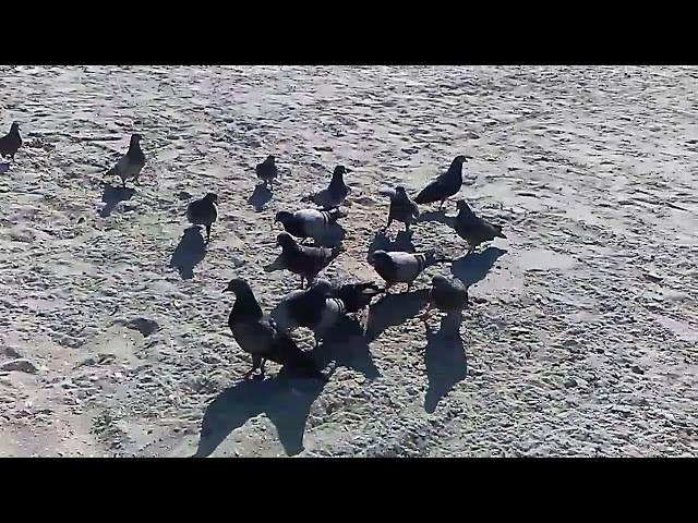 Feeding birds in North Myrtle Beach South Carolina
