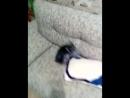 бой без правил кот против собаки