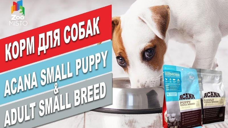 Корм для маленьких пород собак | Обзор корма для собак | Acana Adult Small Breed Puppy Small Breed