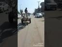 Donkey wheel funny video