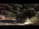 Нильский крокодил убивает антилопу гну бегемот пытается помешать