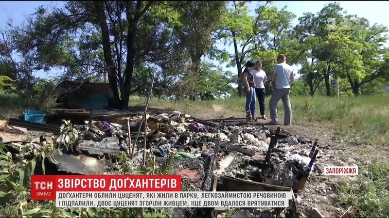 У Запоріжжі догхантери заживо спалили цуценят, які жили в парку