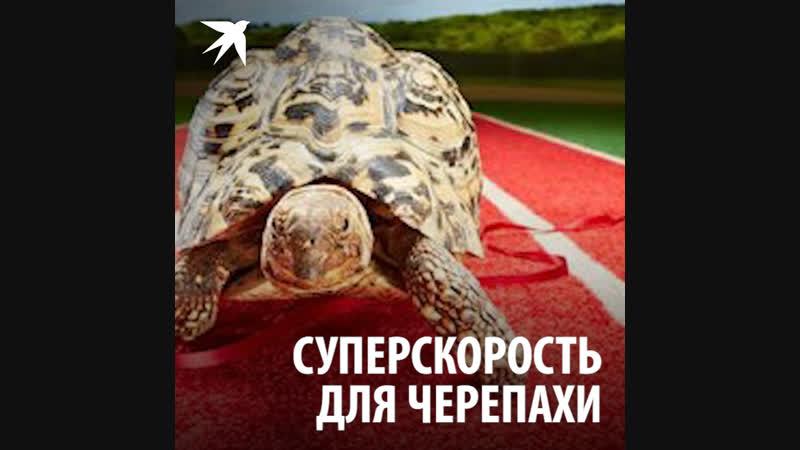 Суперскорость для черепахи