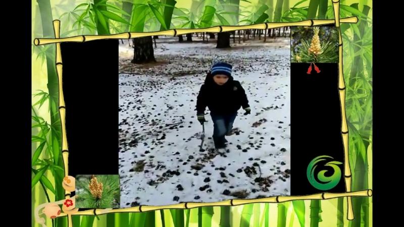 Дети и сосновая пыльца Guozhen Компания Новая Эра индустрия здоровья
