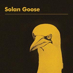 Solan Goose