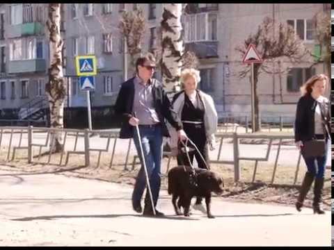 Единственная в городе собака-поводырь