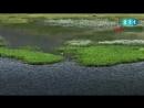В Ризе пастухи прогнозируют погоду по плавающим островам