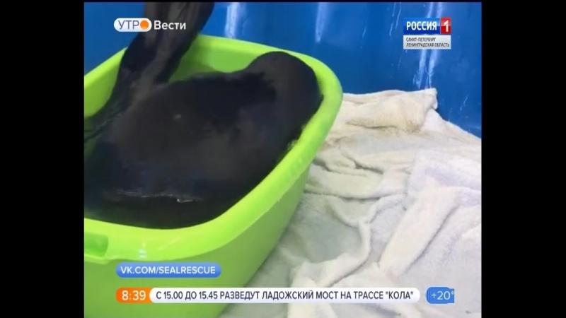Вести - Санкт-Петербург.Утро от 18.06.2018 vestispb вестиспб vesti spbnews