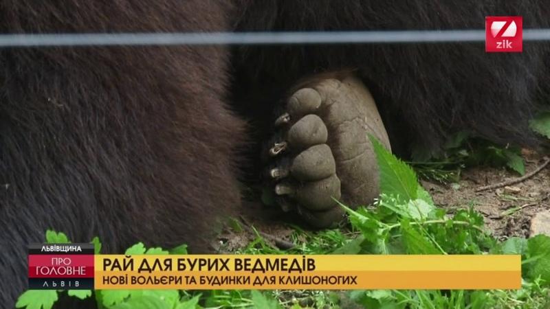 На Львівщині офіційно відкрили ведмежий притулок