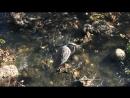 Цапля США Природа Любительская съёмка Очевидец Птицы Америки