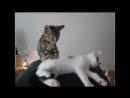 Зверский массаж. Прикол. - Brutal massage. Funny. Animal - 宠物做按摩