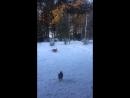Похитительница медведки
