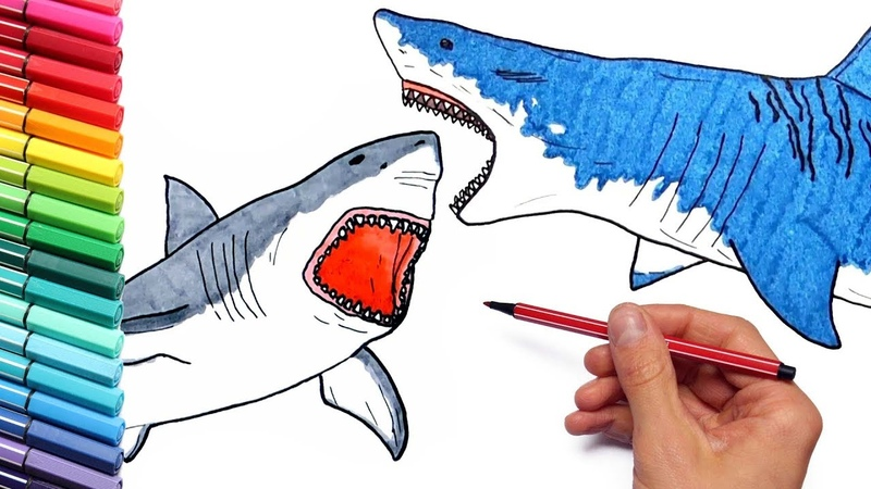 Megalodon VS Shark Drawing and Coloring Pages for Children - How To Draw Sea Animals