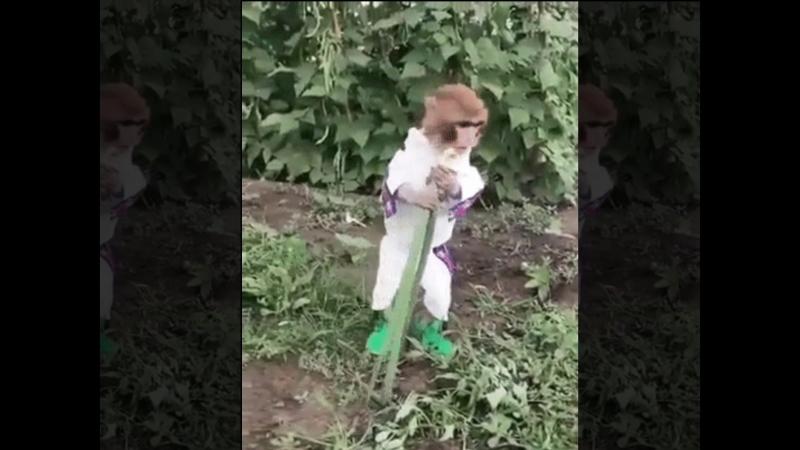 В русской деревне вырос. Про бананы знать не знает .)