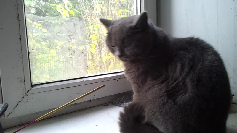 Дождливое утро Бандитка на окне