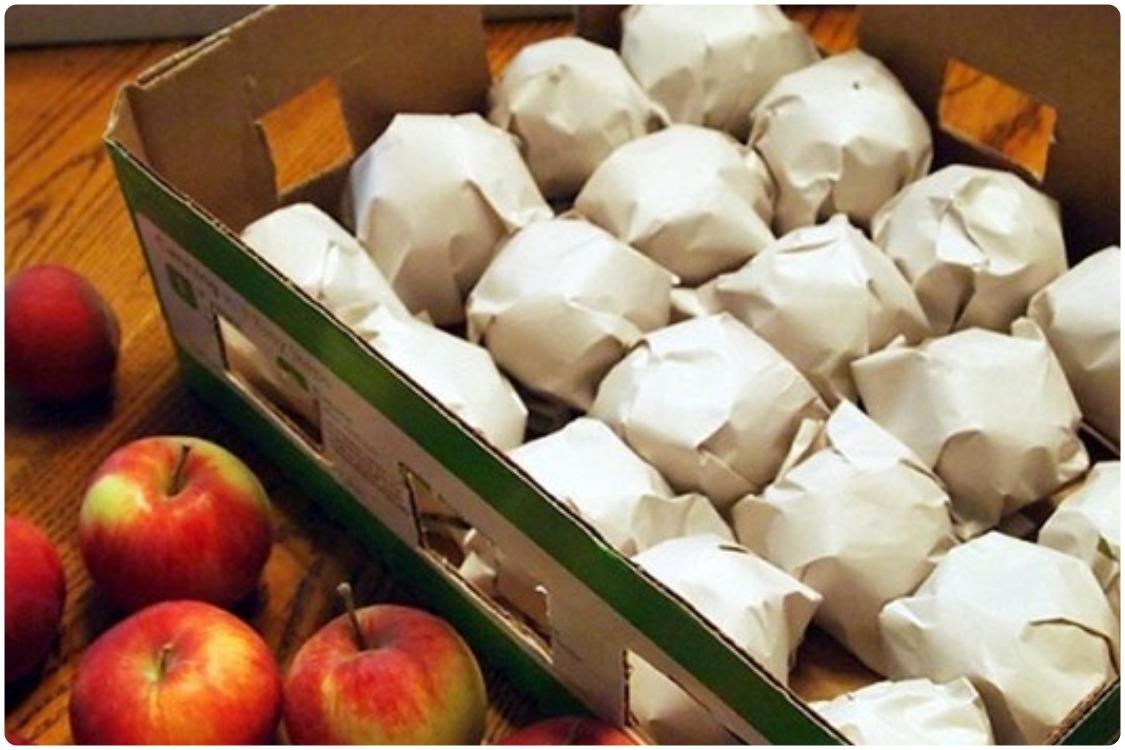 Как сохранить яблоки зимой