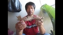 How to make a chinese dragon with cannabis rope มังกรจากต้นกัญชา