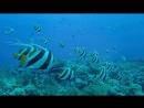 Подводное путешествие🌎🐳